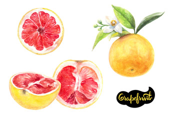 grapefruit watercolor hand drawn illustration isolated on white