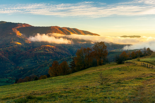 wonderful countryside in mountains. glowing fog rolls above the hill. fence and trees on grassy hill. wonderful morning light