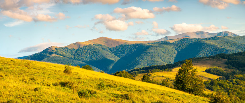 panorama of autumn countryside with grassy rolling hills. wonderful evening scenery with beautiful clouds above the distant ridge