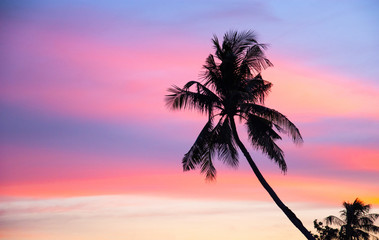 Coconut trees in the evening. The background sky bright colors Sunset. Black silhouette