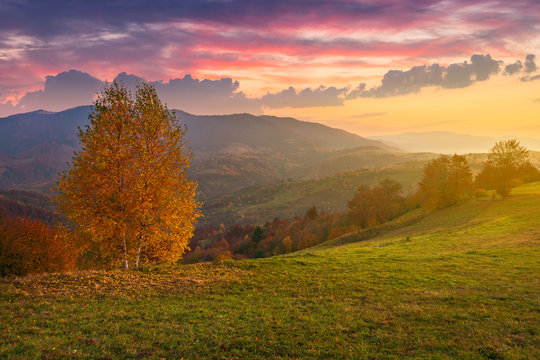 birch tree on a hill in autumn at sunrise. beauttiful mountainous countryside with gorgeous sky. bright and hazy atmosphere around