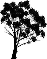 black silhouette of large lush tree on white