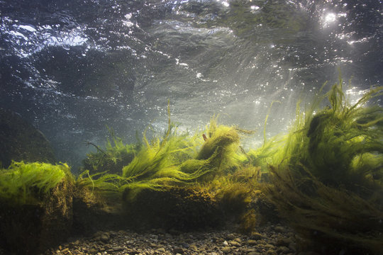 River underwater rocks on a shallow riverbed with clear water. Underwater scenery, algae, mountain river cleanliness. Underwater river habitat. Little stream with gravel.
