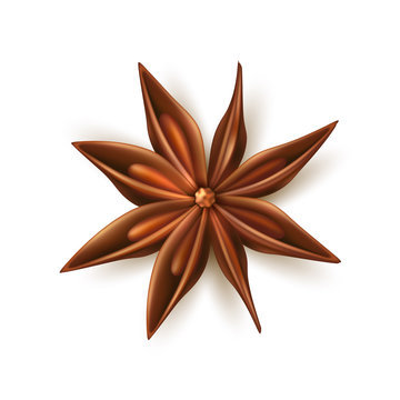 Realistic dried anise star vector with pits