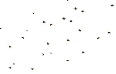 Fliegender Bienenschwarm Fototapete