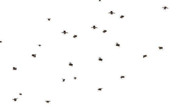 Fliegender Bienenschwarm