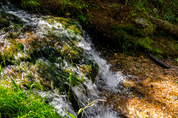 Forest stream, fast water flow