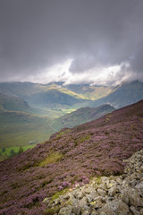 Great view into great langdale Lake district England from lingmoor fell colored puprle by the heather