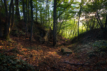 Special moment just before sundown the sunlight brightens up the colorful autumn forest leaves Ardennes
