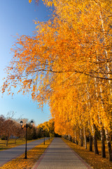 Yellow and orange leaves on the trees in the park in autumn. The earth was covered with a layer of fallen golden leaves. Sunny autumn day.