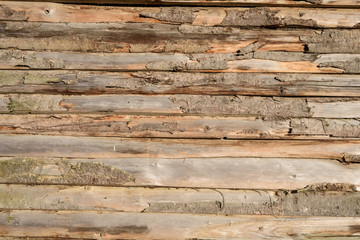 Raw wooden tree wall background