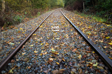 old train track railway in autumn senery with colored leafs in forest