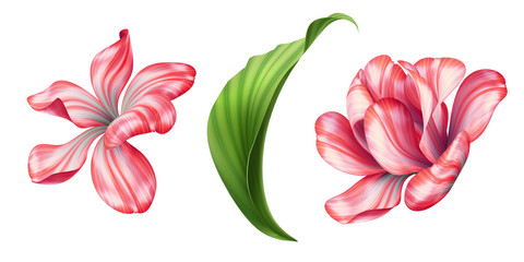 botanical illustration, beautiful red tropical flowers, floral clip art, design elements set, isolated on white background