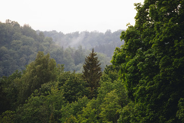 Moody green mountain forest with fog in the background