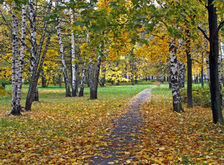 Track in a birchwood covered with an autumn leaf fall