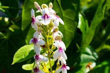 バリ島の白い花