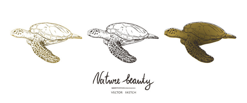 Vector illustration. Pen style vector sketch. Terrapins. Underwater world . Vector objects set.