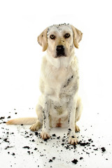 PLAY IN A MUD PUDDLE. ISOLATED AGAINST WHITE BACKGROUND. STUDIO SHOT. FRONT VIEW.
