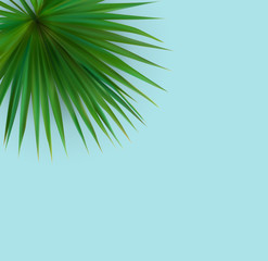 Beautiful Palm Leaf Tropical Background. Vector Illustration