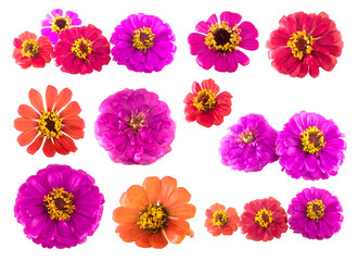 Isolated flowers on the white background. It is a colorful of flower from Thailand.
