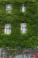House facade overgrown with ivy