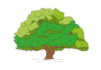 big tree drawing color, vector,