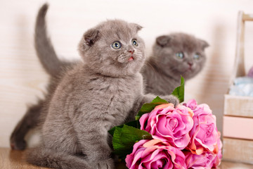 Couple of cute cats near a bouquet of roses.