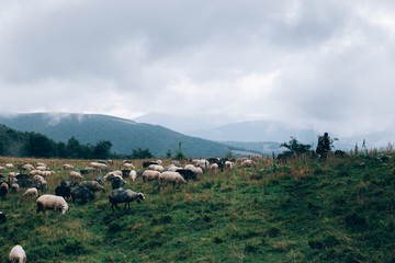 landscape with mountains sheeps and clouds