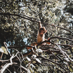 Monkey playing on tree branch