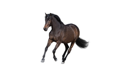 Wall Mural - Bay horse run gallop isolated on white background