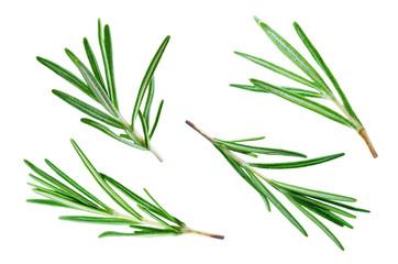 Fresh Rosemary leaves isolated