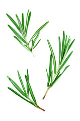 Fresh Rosemary leaves isolated