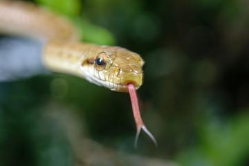 ヘビの接写