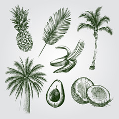 Hand Drawn Palm trees and coconuts Sketches Set. Collection Of palm trees, palm leaf, coconut, banana, avocado, pineapple Sketches on white background. Vector tropical elements In Sketch Style.