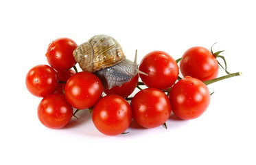 snails on a red tomatoes.