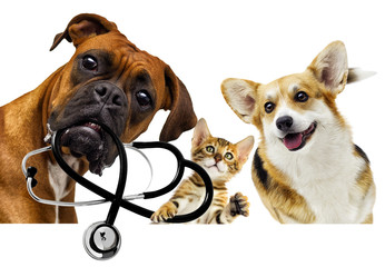 veterinarian dog and cat