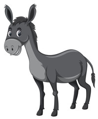 Grey donkey white background
