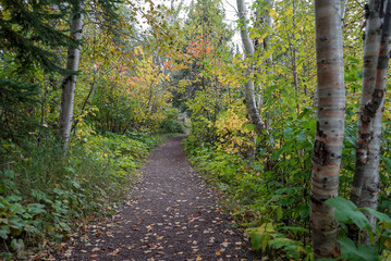 Beautiful Autumn trail at Tettegouche State Park in Minnesota