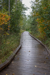 Scenic wooden hiking trail in deep woods with Autumn colored leaves