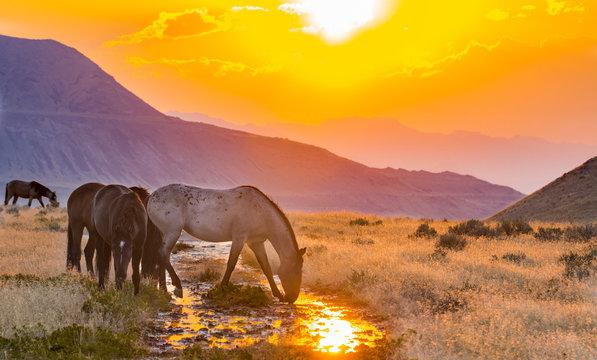 Onaqui Herd of Utah