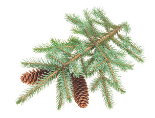 Fir tree cones with branches