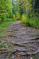 Rugged Hiking Trail at Jay Cooke State Park