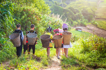 The Girl and boy wearing a Hmong dress carry bamboo basket on her back on the path to their village and To vegetable garden at Phuhinrongkla National Park Nakhon Thai District in Phitsanulok,Thailand.
