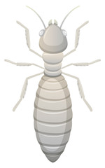 white termite white background