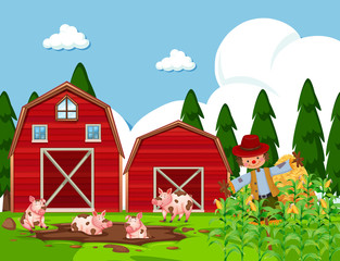 Farm scene with pigs in mud