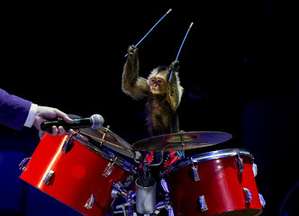 "A monkey performs during the presentation of the new show ""The Show of the Giant Fountains"" at the National Circus in Kiev"