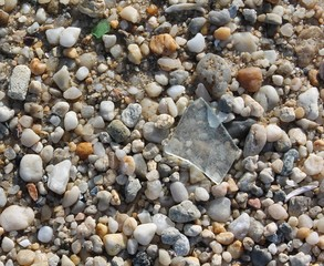 Piece of glass among the pebbles on the beach.