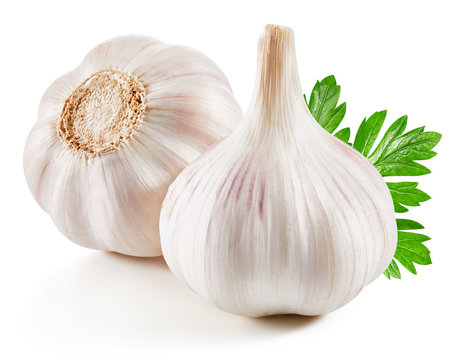 Garlic Isolated on white