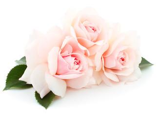 White beautiful roses.