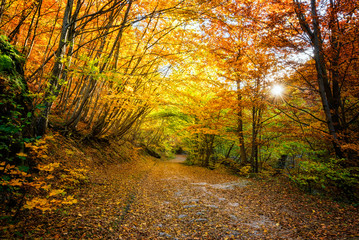 Autumn forest / Amazing view with a road through the autumn forest of Rhodopi Mountains, Bulgaria